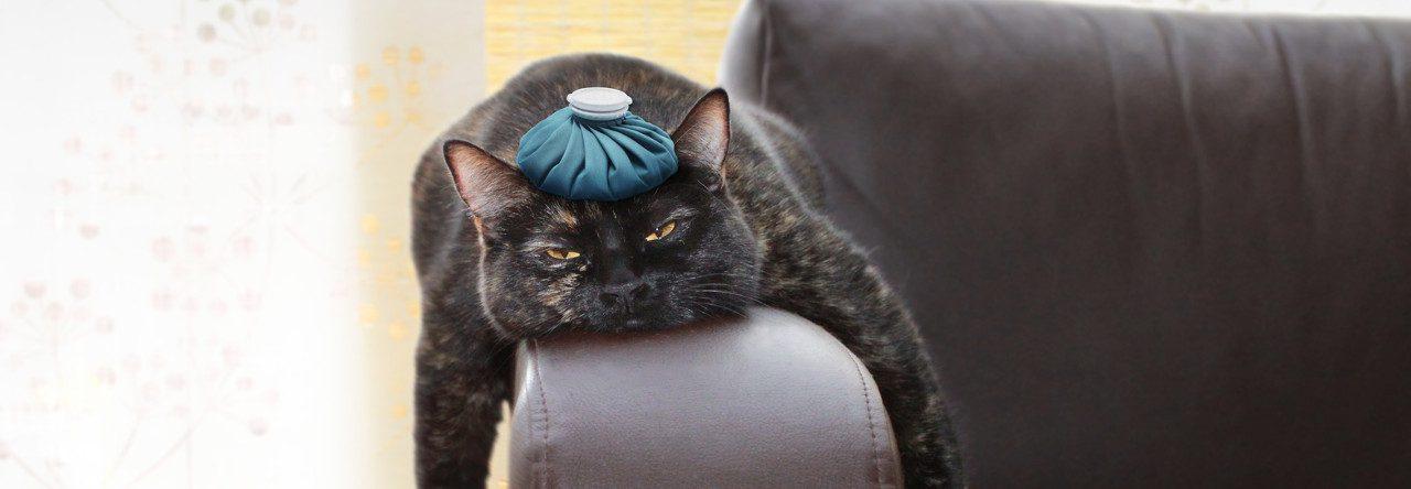 Strebermiezen Katzenblog - Katzenpsychologie