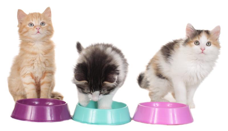 Katzensitting & Katzenbetreuung im Urlaub