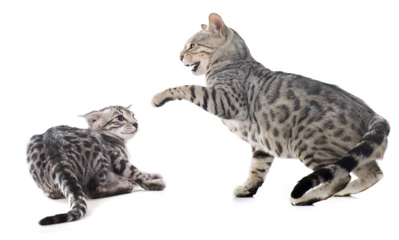 Katzentherapie wegen Aggressivität und Mobbing