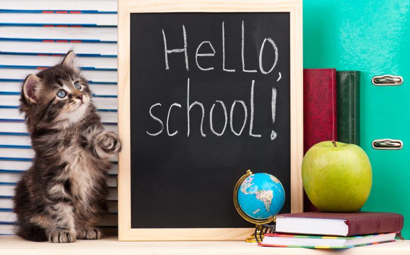 Lernen über das Verhalten von Katzen