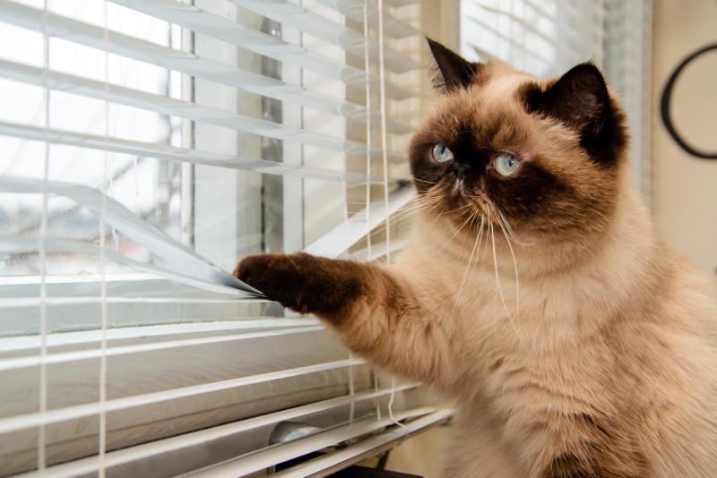 Katze allein Zuhause - Katzenpsychologie