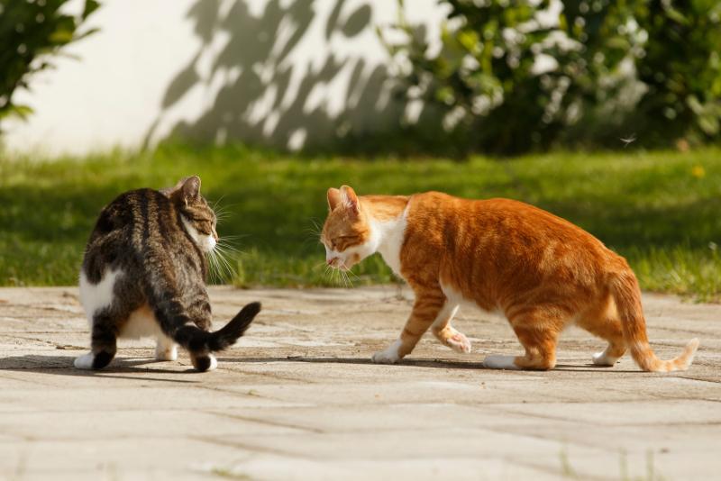 Katzenblog - Katzen Mobbing Psychologie