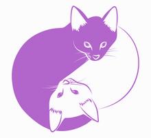 Strebermiezen - Verhaltensberatung und Ernährungsberatung für Katzen