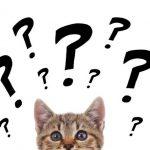Strebermiezen | Katzenblog Serie Teil 1 - Elisabeth Strömer