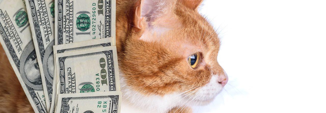 Strebermiezen Blog | Eine Katze kostet Geld