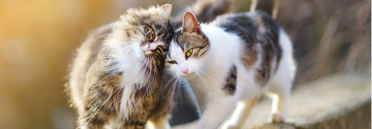 Strebermiezen Katzenblog | Katze oder Kater
